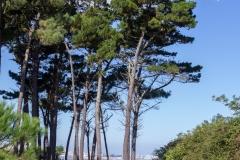 3-Pinos- Bastiagueiro, Oleiros